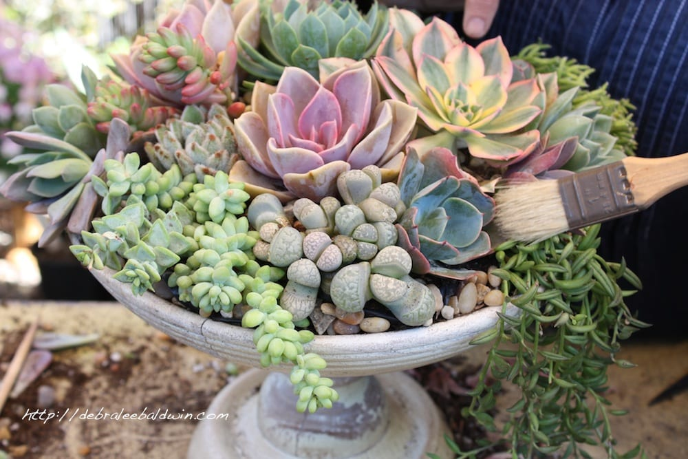 A Succulent Centerpiece in Five Easy Steps