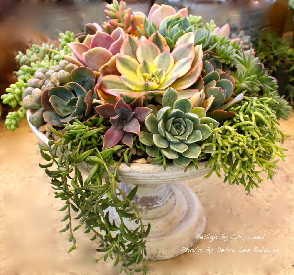 Diy floral style succulent centerpiece step by