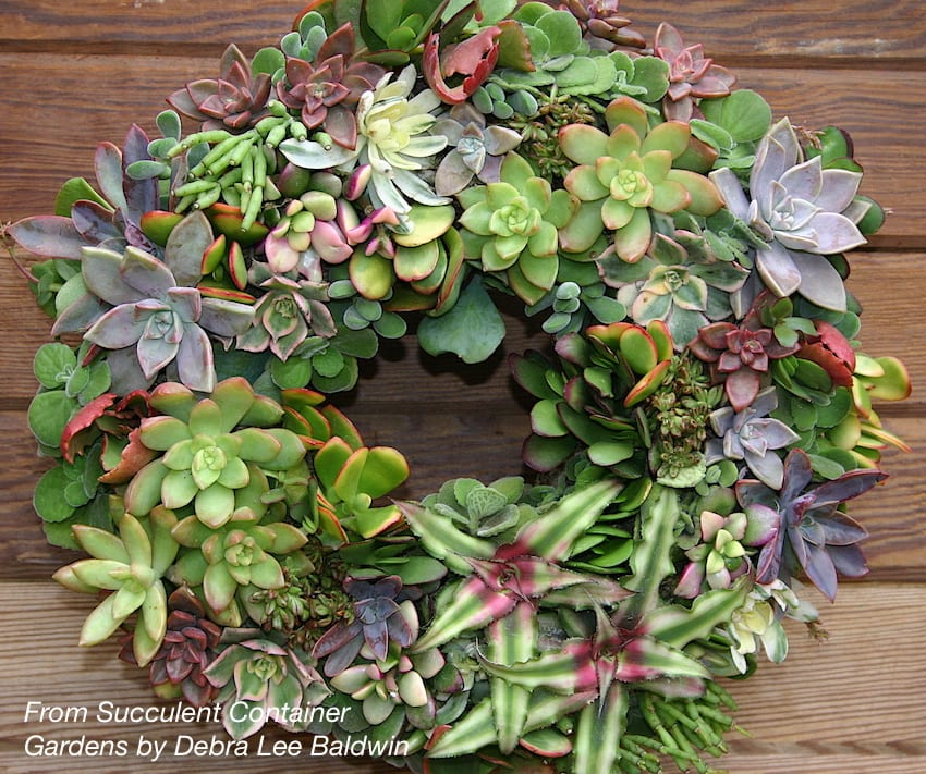 Make a Succulent Wreath, Step-By-Step