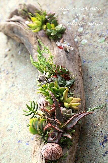 Succulent driftwood design