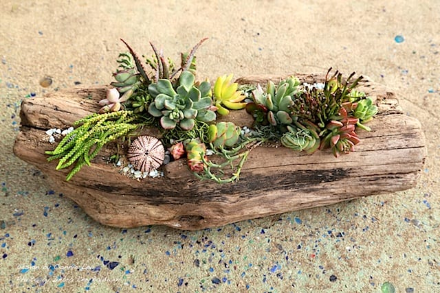 Succulent driftwood design, completed