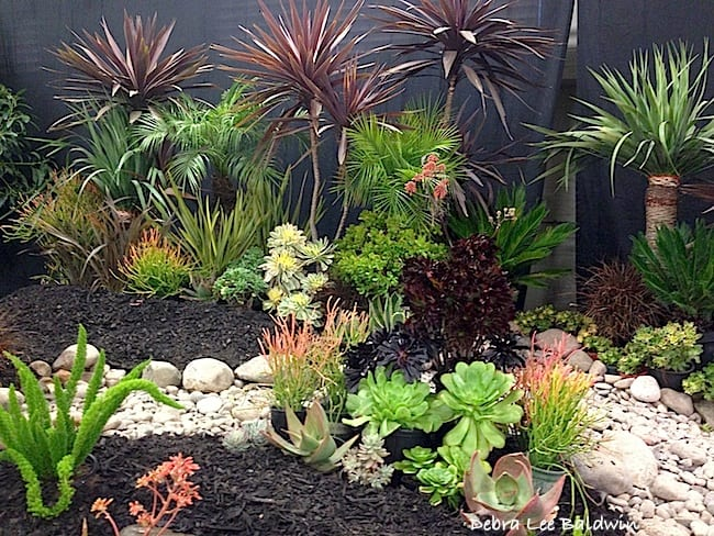 Succulent display garden