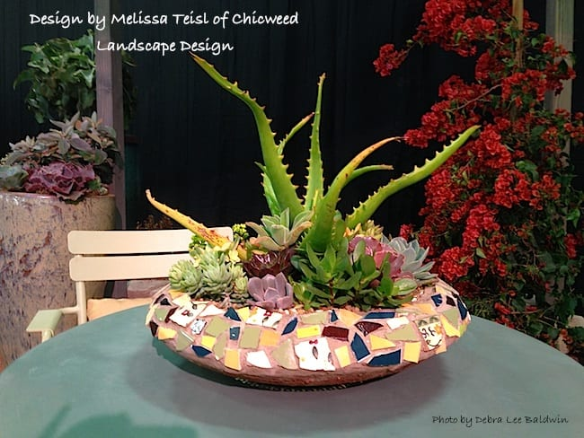 Potted aloe garden by Chicweed