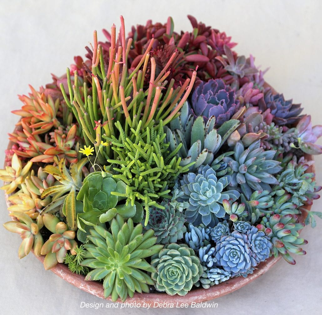 Succulent Color Wheel Rainbow Centerpiece