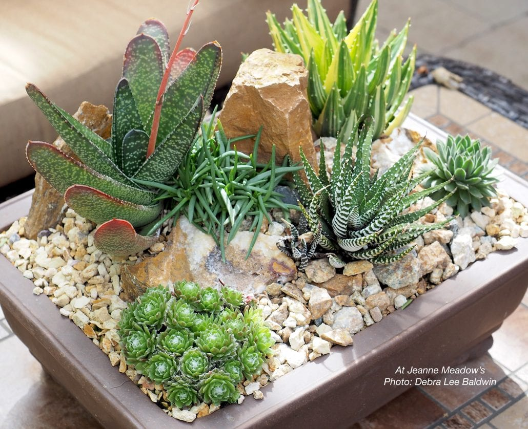 Make A Low Light Scooped From The Garden Succulent Arrangement Debra Lee Baldwin