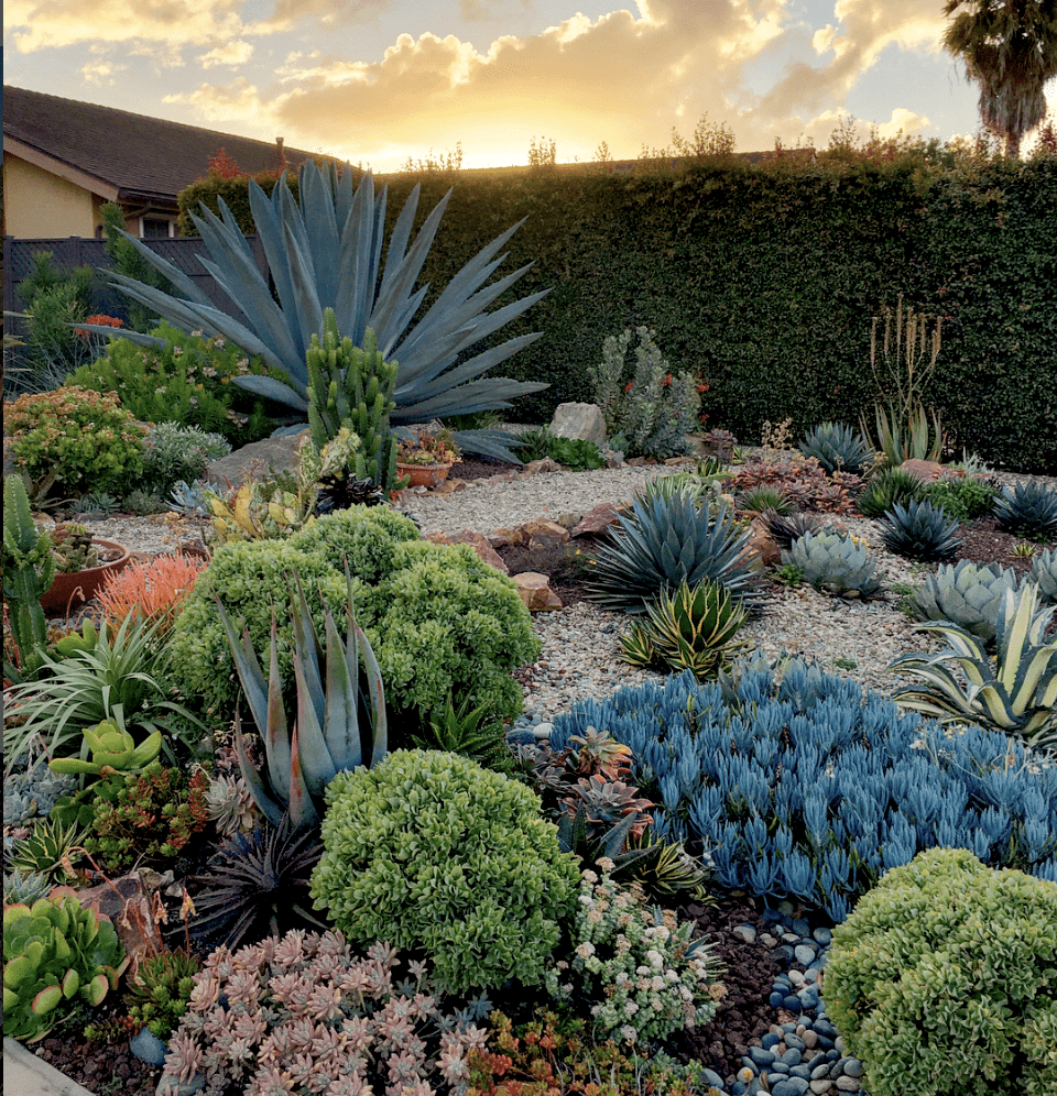 Ten Succulent Front Yard Essentials Debra Lee Baldwin