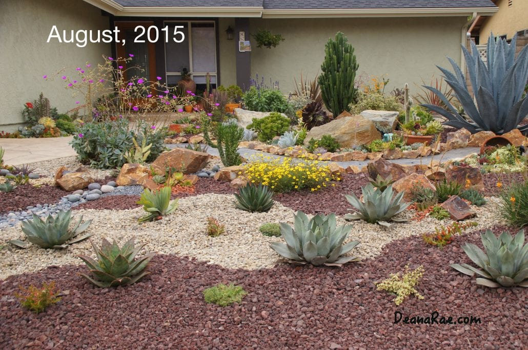 In 2012 A Year After She And Her Husband Moved Deana Rae Cut Out Small Area Of The Lawn Experimented With Succulents They Did Well An Agave
