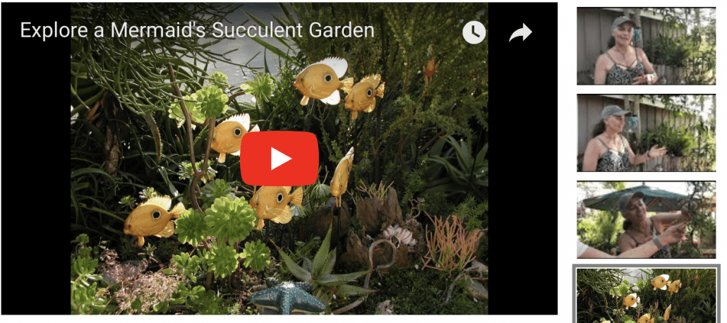 Mermaid Succulent Garden