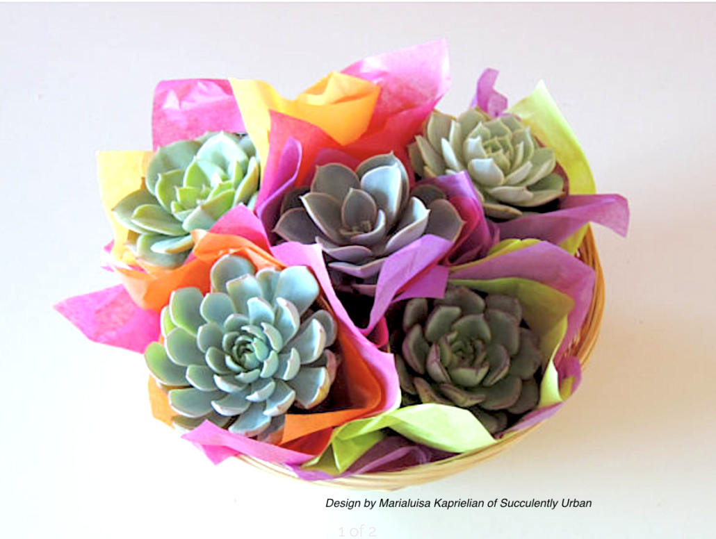 Gifts for Succulent Lovers