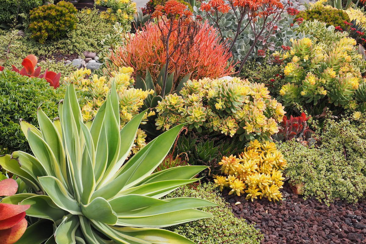 Succulent Garden Design Essentials From An Award Winning Garden