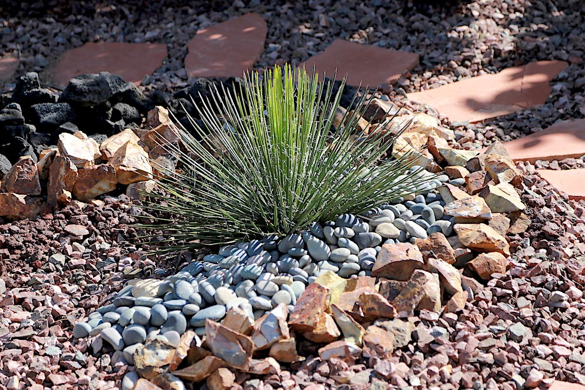 Agave filifera in a Laura Eubanks garden