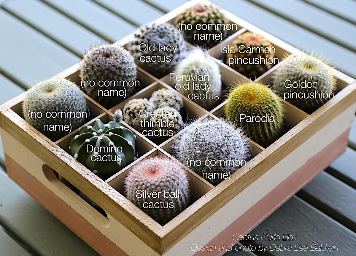 Common cactus, common names