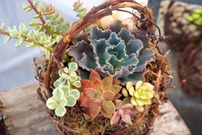 Floral style succulent arrangement, willow basket