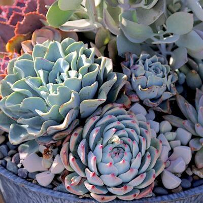 Floral style succulent arrangement