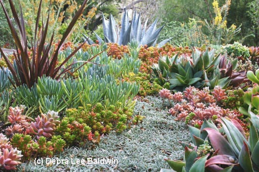 About Succulents, from Aeonium to Zebra Plant by Debra Lee Baldwin